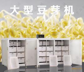 大型豆芽机设备 我爱发明豆芽机 鑫丰机械无公害豆芽机