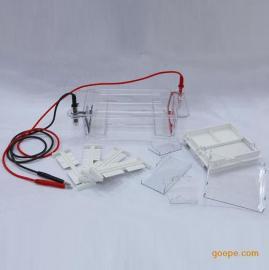 DYCP-31DN 琼脂糖水平电泳仪(槽)