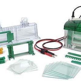 美国Bio-Rad 小垂直板电泳槽