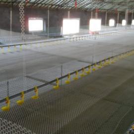 3米宽塑料养殖网|雏鸡塑料平网|成鸡养殖网规格