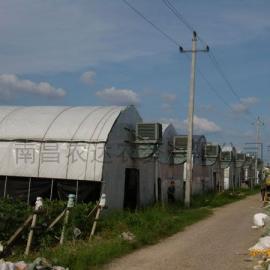 pep希腊进口黑白膜 养殖大棚膜 食用菌大棚膜