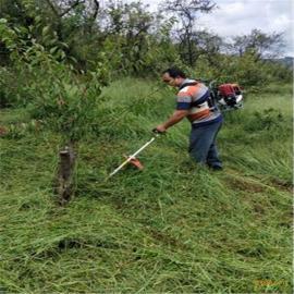 小型除草机 果园肩背式锄地松土机