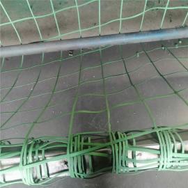 绿色钢塑格栅 植物攀爬网 复合钢塑定做