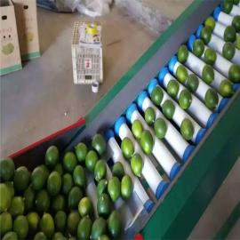 凯祥柠檬选果机AG官方下载AG官方下载AG官方下载,分选柠檬大小的机器AG官方下载AG官方下载AG官方下载,柠檬重量分级机