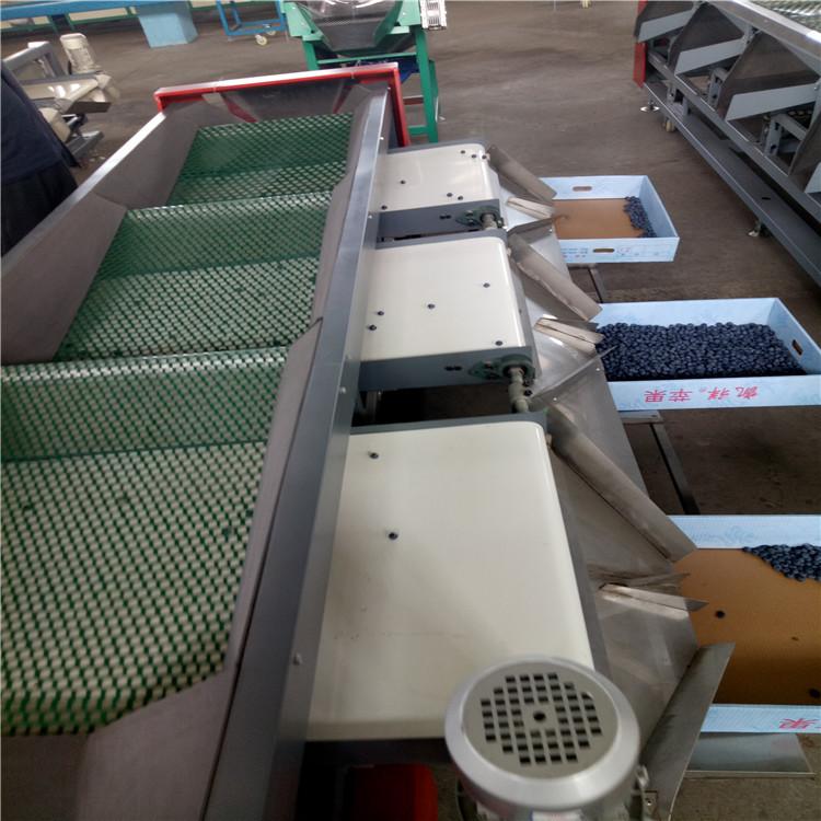 凯祥蓝莓直径分选机,蓝莓选果机XGJ-LM5