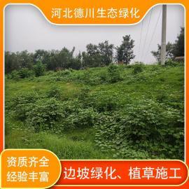 德川生态绿化固土护坡-三维网植草-客土喷播-矿山复绿-植生毯施工-山体绿化SNS788